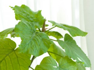 ime_green